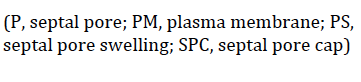 Picture_24_12b7fc35061984e286fc2511e073fa1be449ff5e