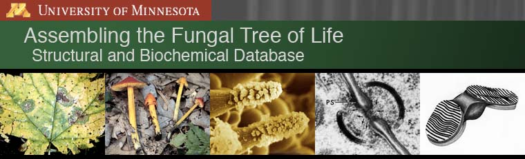 Assembling the Fungal Tree of Life